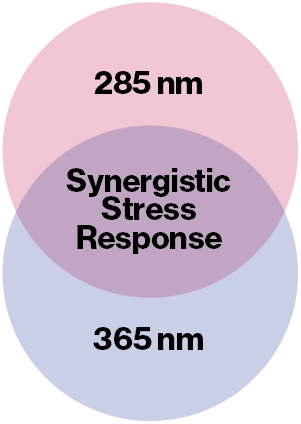 Synergistic Stress Response.png