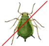 aphid.png