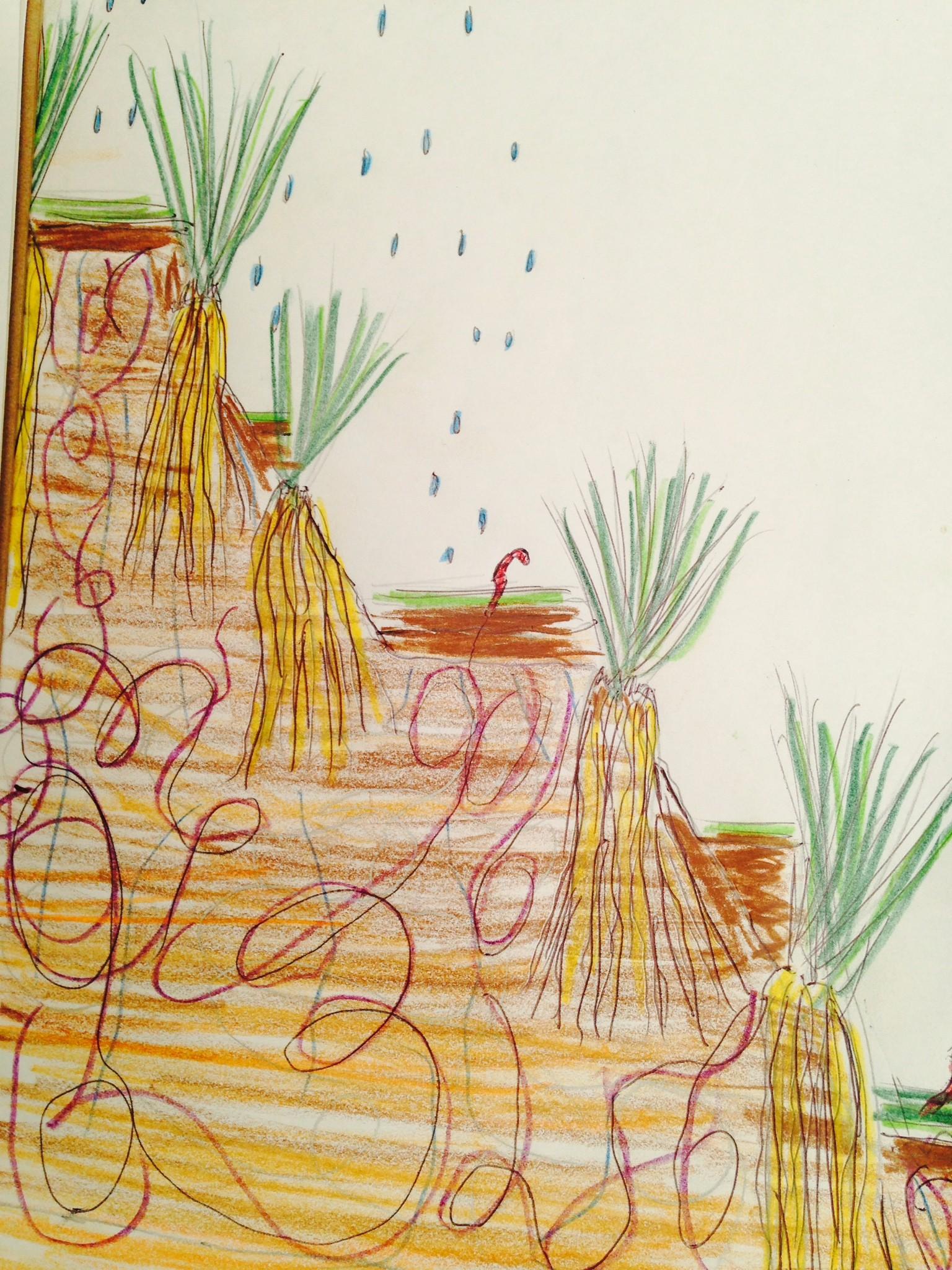 rec-vetiver-worms-illustration.jpg