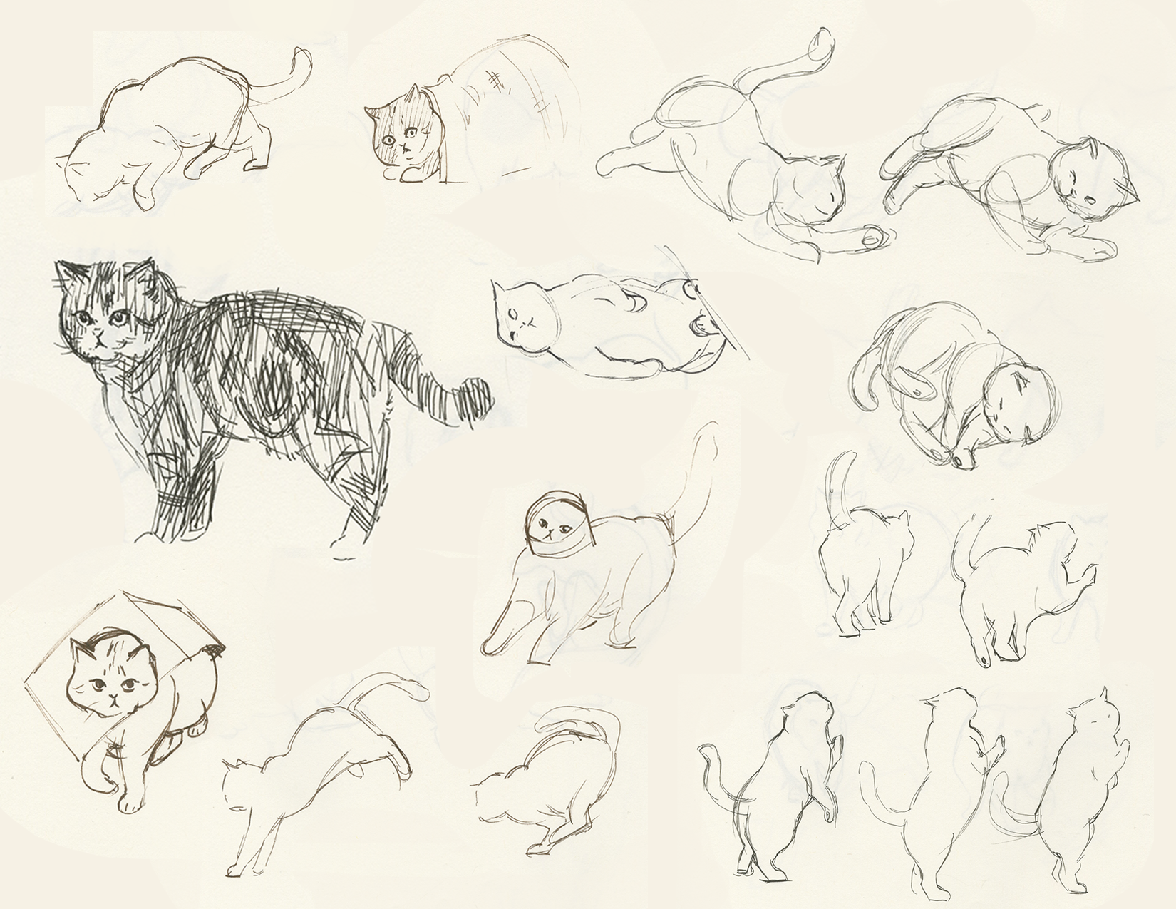 Maru the Cat Sketch Book study  2018