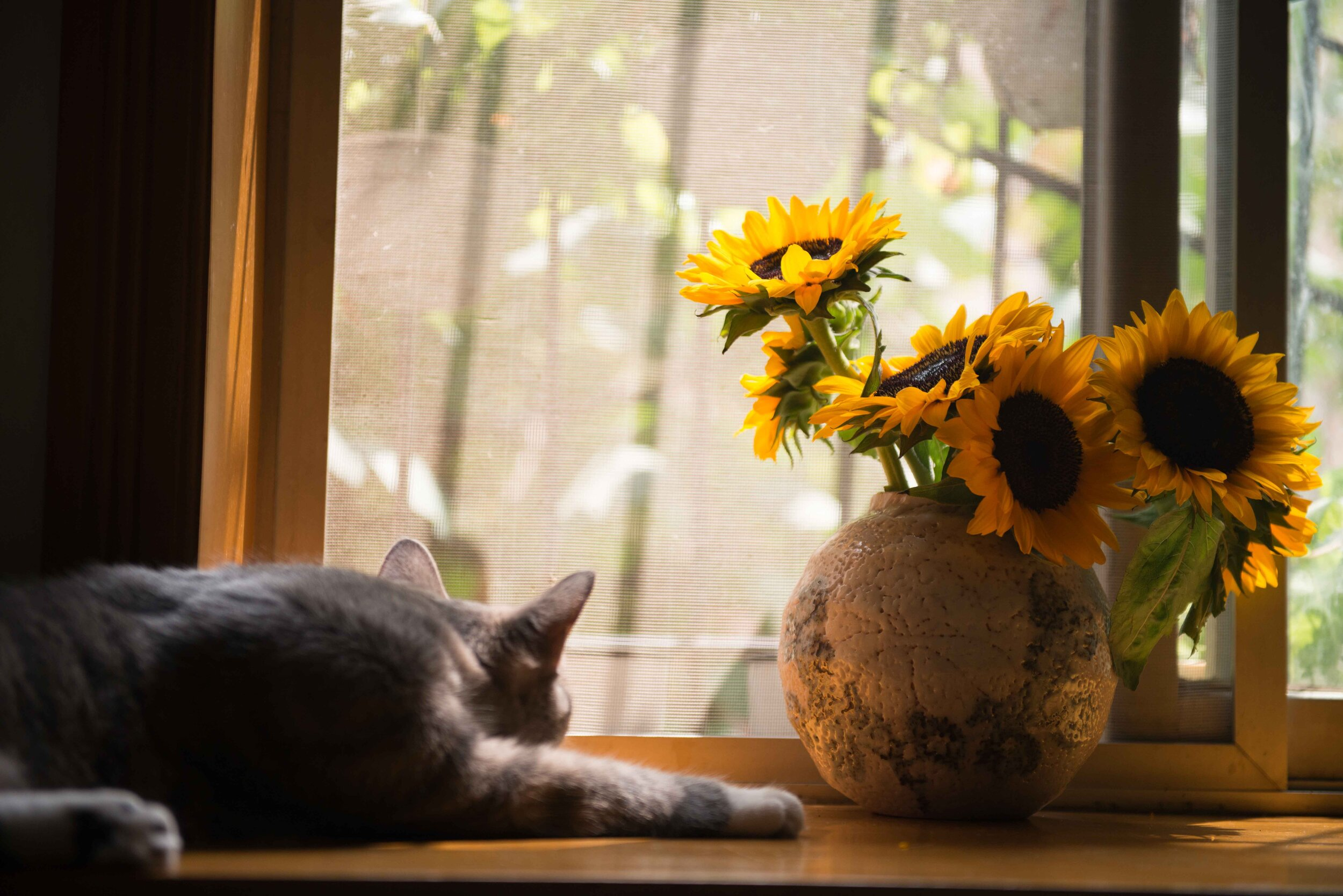 cat-colors-daylight-674580.jpg