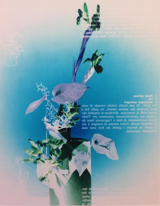 M. Walker Flower Series