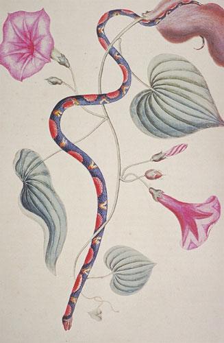 The Bead Snake - RL26011