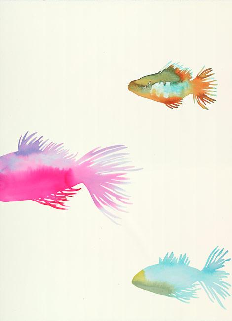 School of Fish (C)