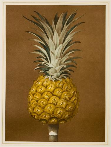 Pineapple (A)