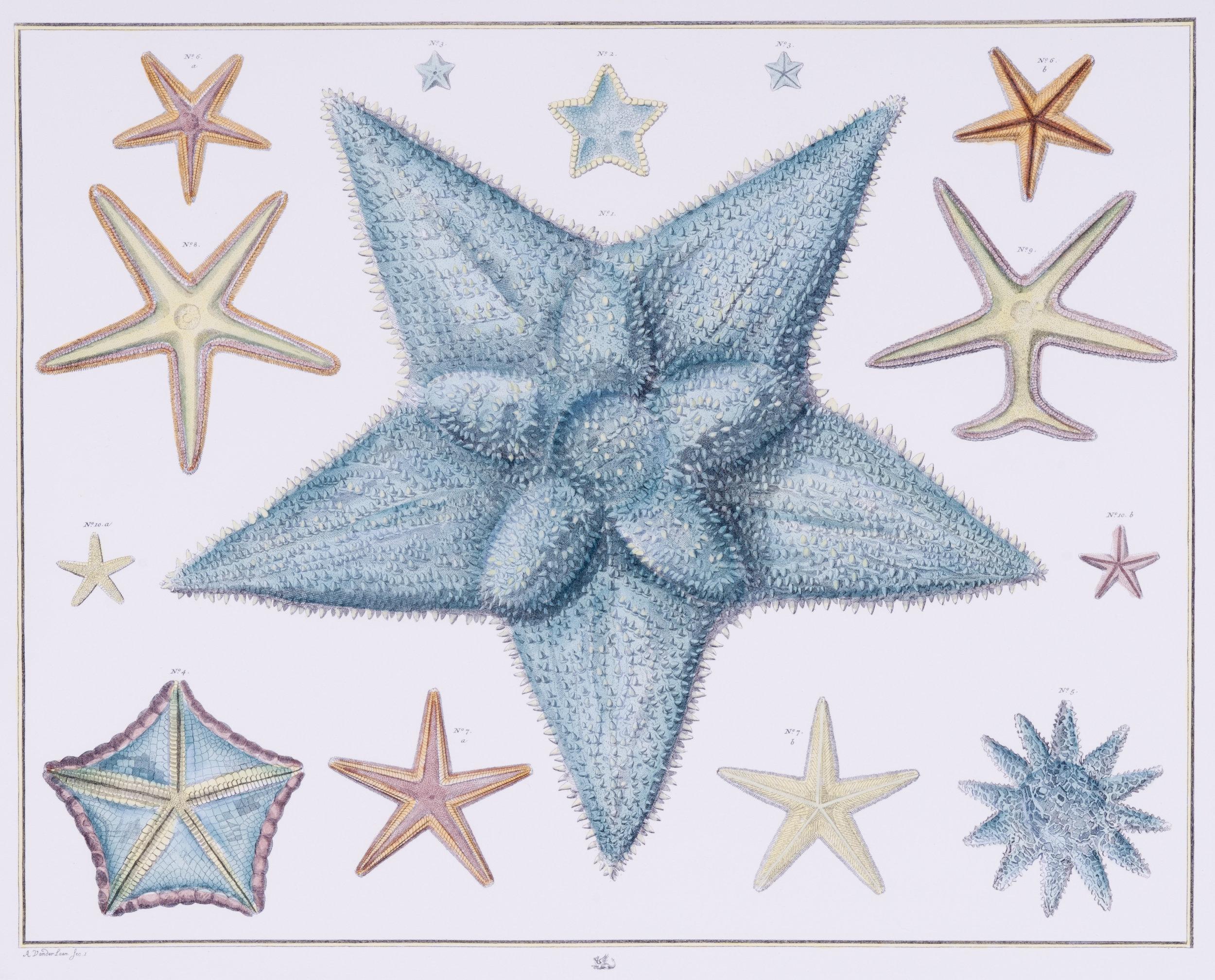 Starfish Specimen