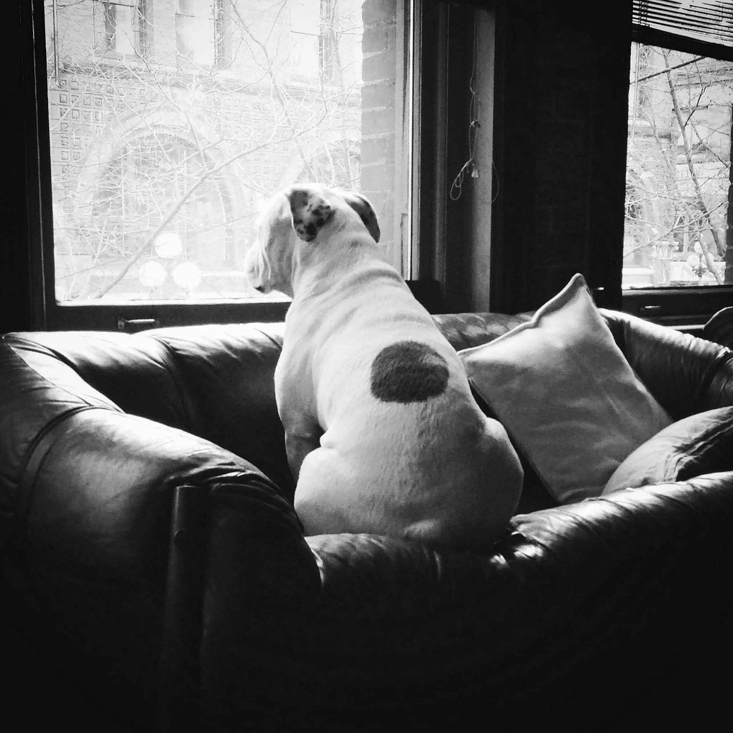 Wubbi, The Original House Dogge, 2011-2018