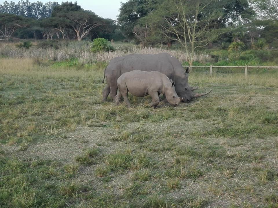 rhino6.jpg