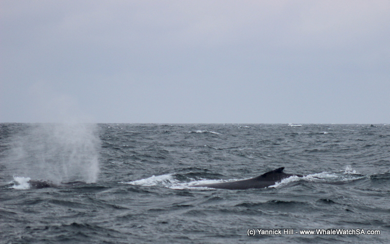 Boat-based-whale-watching-adventure-tourism-south-africa-cae-town-safari-1.jpg