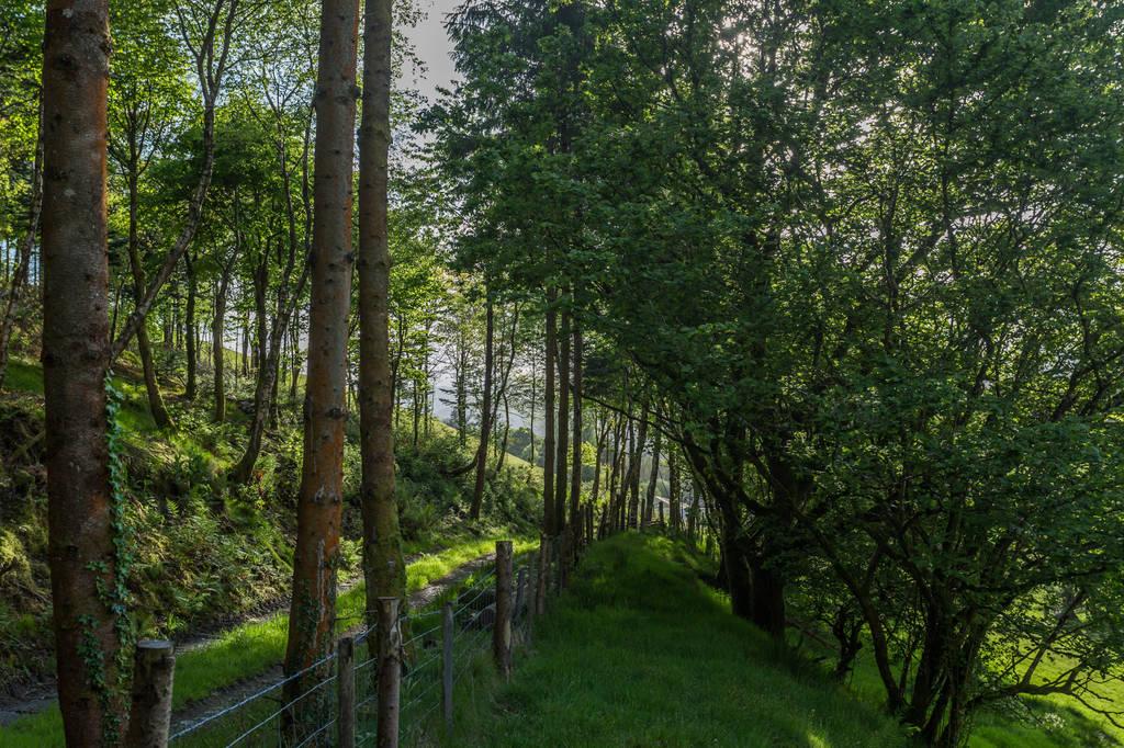 Caban-cilfa-tracks