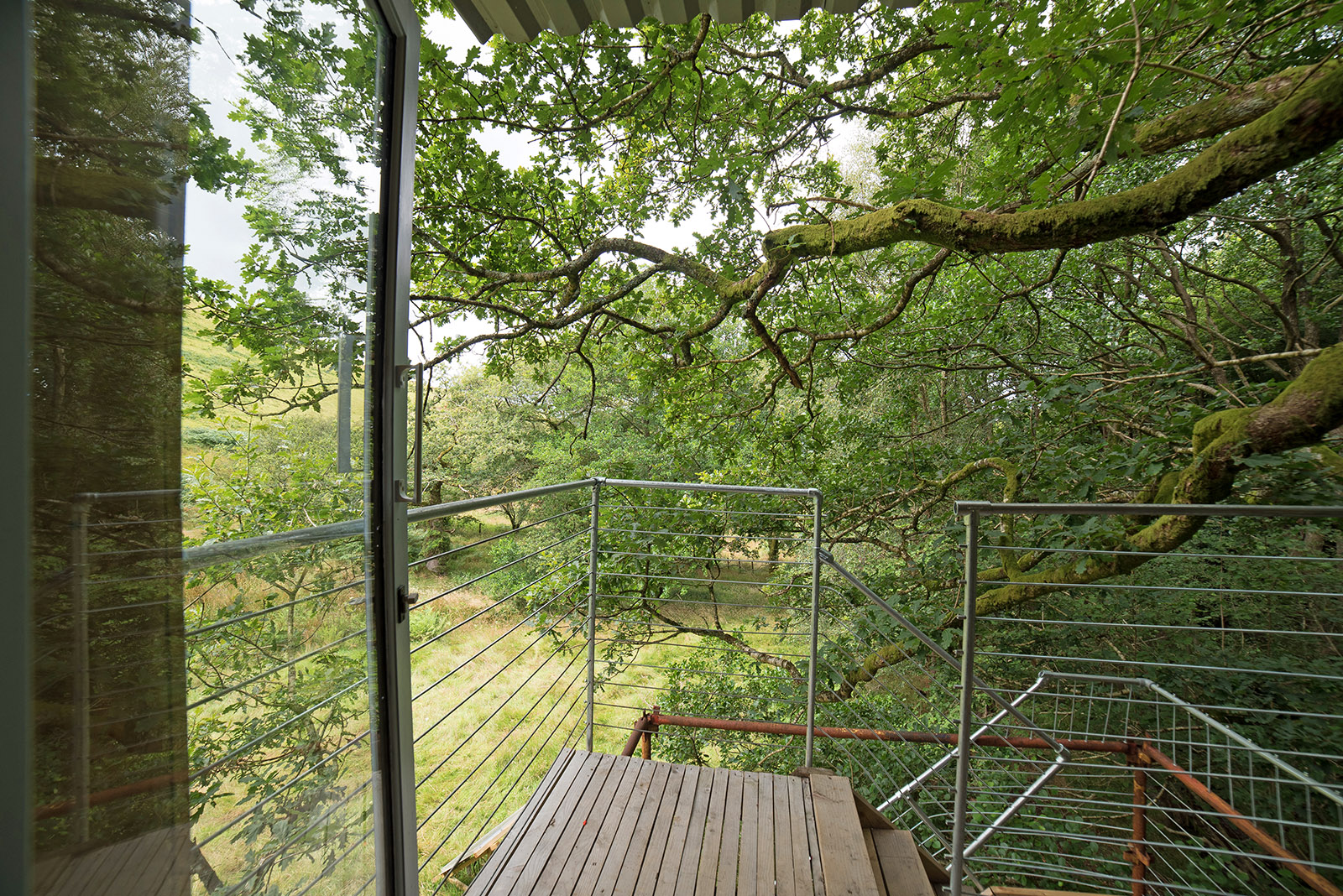 Treehouse views through the branches