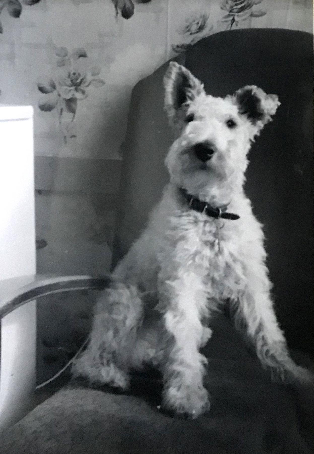 Henry Dog BW.jpg