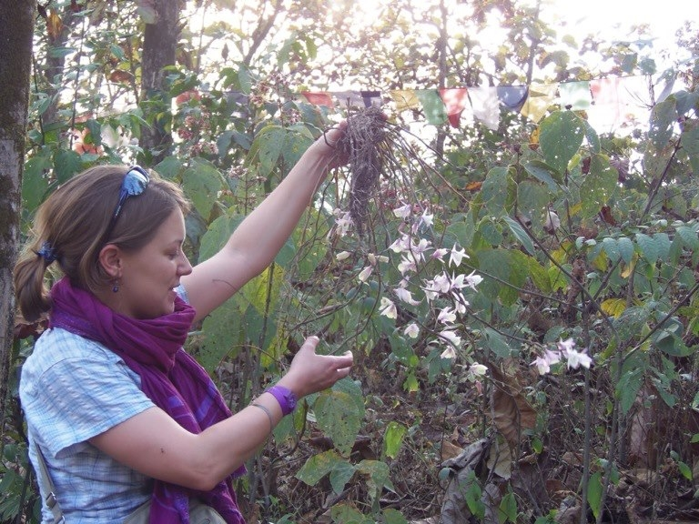 Lauren_Gardiner_orchid_Sikkim_Dendrobium_aphyllum_larger.jpg