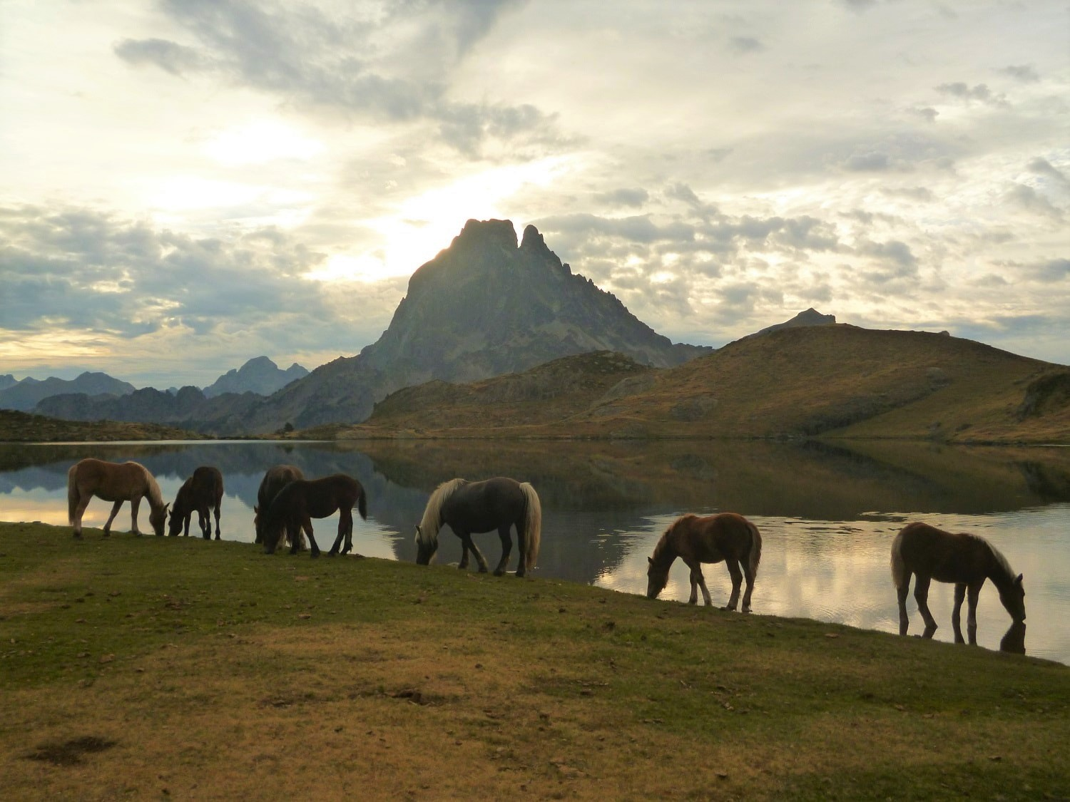 Wild horses are a common sight in the Pyrenees mountains — Here they are from the lake in front of Refuge d'Ayous with the Pic du Midi d'Ossau in the background.