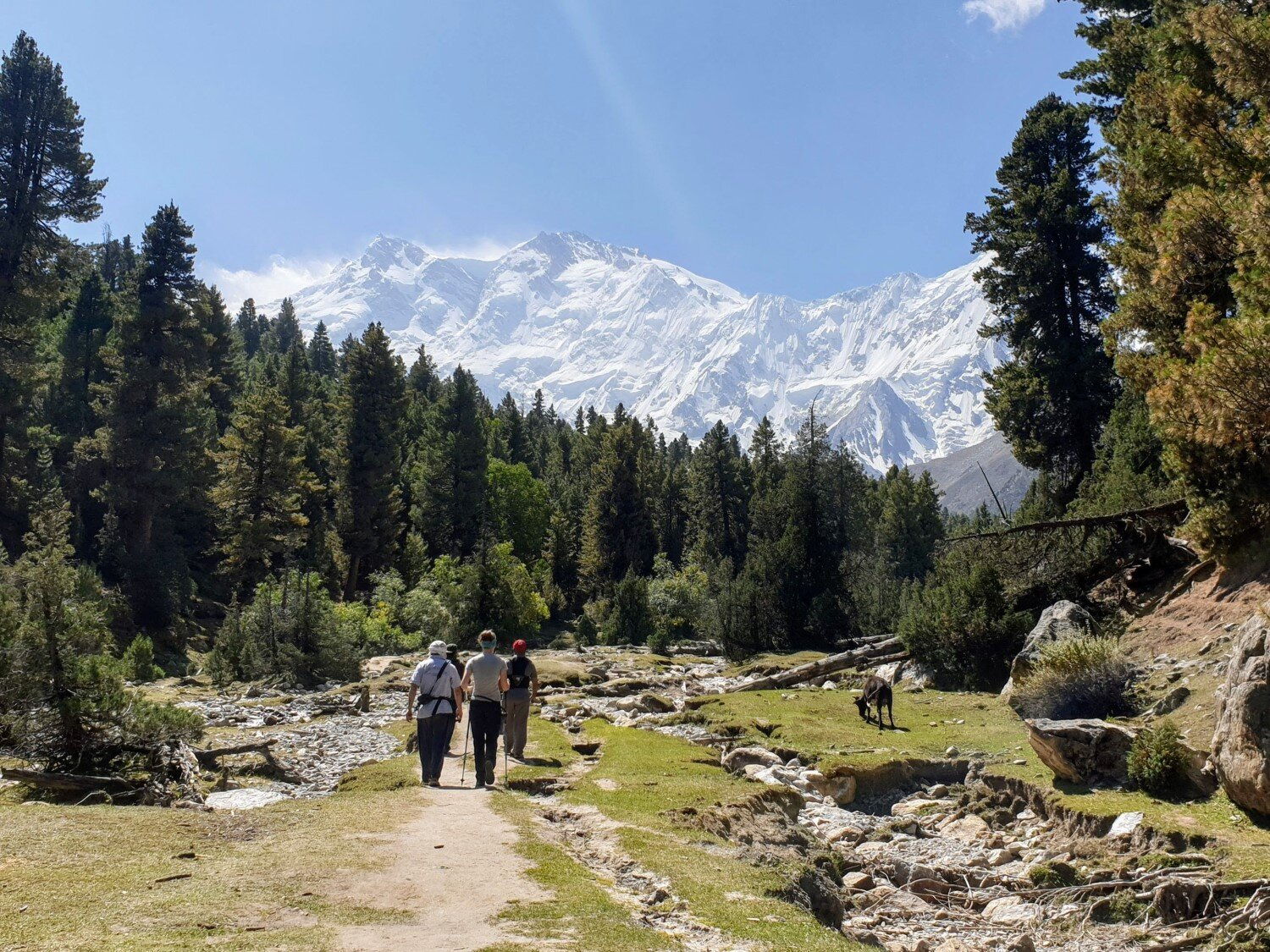 The path to Beyal Camp offers some stunning glimpses of Nanga Parbat in the distance.