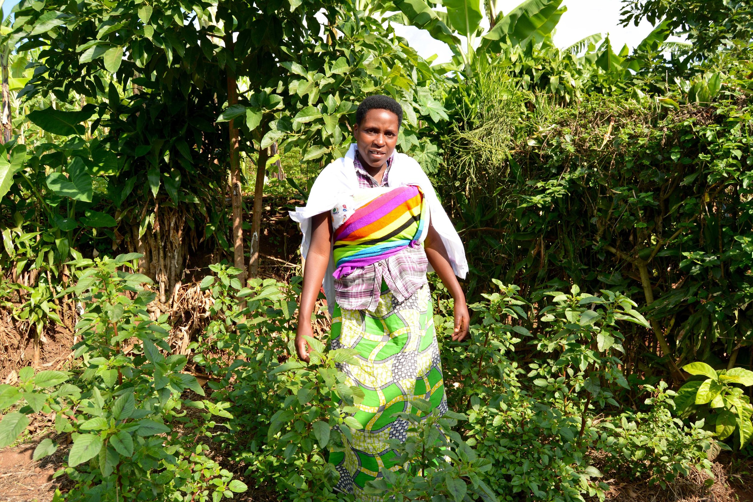 Claudine shows off her flourishing home garden full of Amaranth.