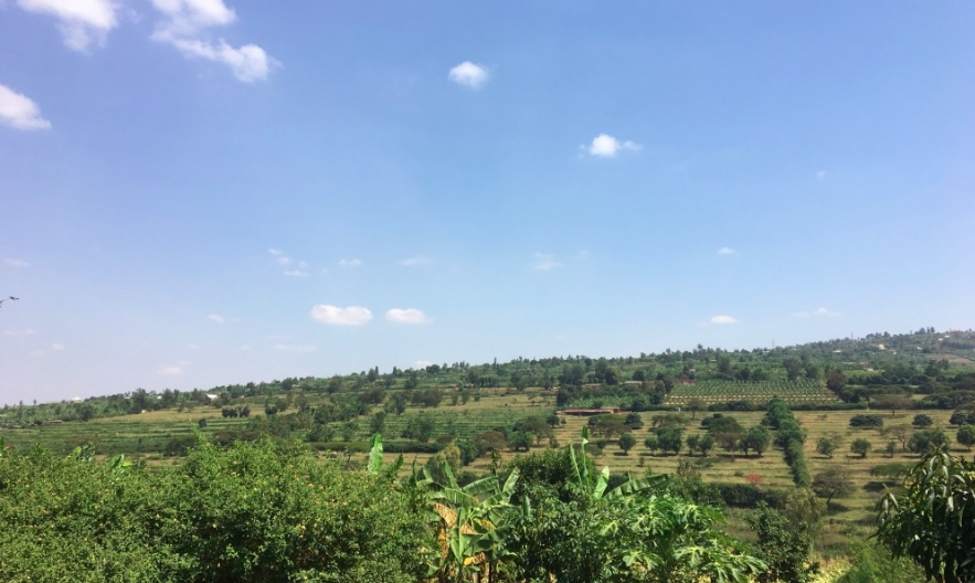 Sunny day on the farm. GHI office in Ndera, Kigali