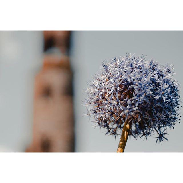 Flower near Blarney Castle🌷 . . . . . . . . #ireland #blarney #blarneycastle #countycork #cork #flower