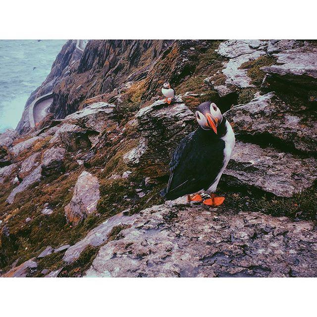 You want sum puff? . . . . . . #skelligmichael #ireland #skellig #michael #skelligs #puffin #puffers #bird #starwars #jedi #vsco #vscocam #sonya6300 #picoftheday #picture #sea #water #rocks #cliffs