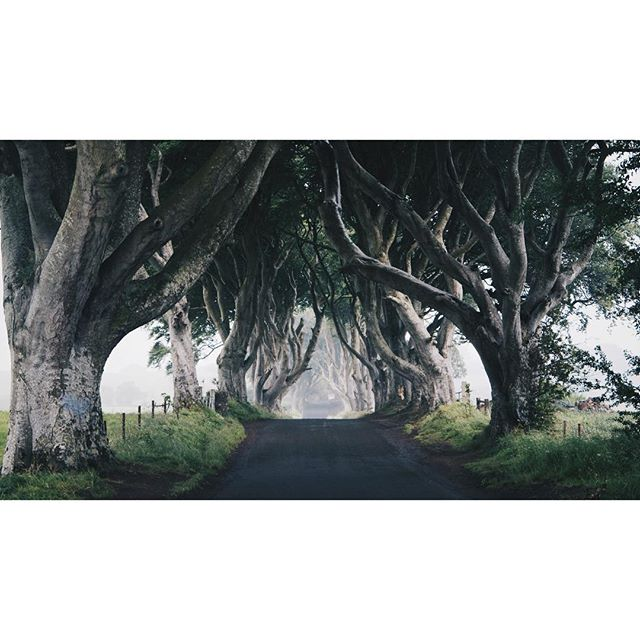 The Dark Hedges in Northern-Ireland. One of the locations used in Game of Thrones. . . . . . . . . . . . #northernireland #darkhedges #ireland #gameofthrones #kingsroad #darkhedgesnorthernireland #got #icu_ireland #ireland_gram #insta_ireland #trees #road #mist #fog #green #emerald #vsco #vscocam #photogrid #picture #picoftheday #sonya6300 #sony #roadside #travel #travelgram #travelblogger #traveling #photography #evenaar