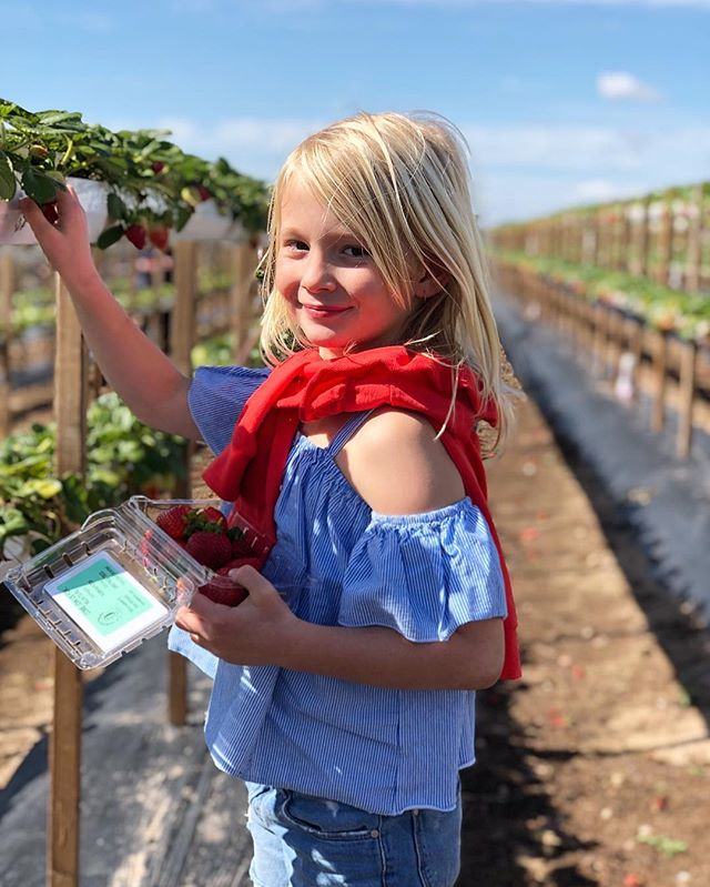 Have you checked out your local farmers? - Farmers markets are popping up everywhere. Choose organic, locally grown produce to support our local farmers. - Did you know there are farms that let you visit their farm and pick seasonal fruits and veggies. It's both educational and a fun day trip with family or friends! - - - - - - - #locallygrownproduce #strawberrypicking #localfarmersmarkets #nutritionaltips #magnusmethod #magnuslygdback