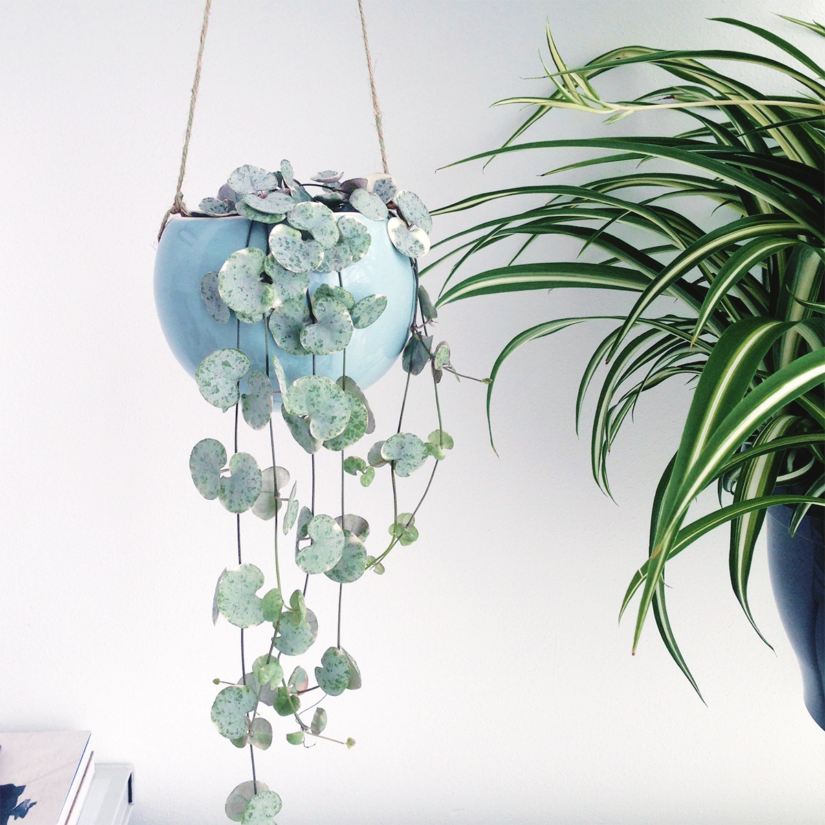 Hanging planters | Urban Jungle Bloggers