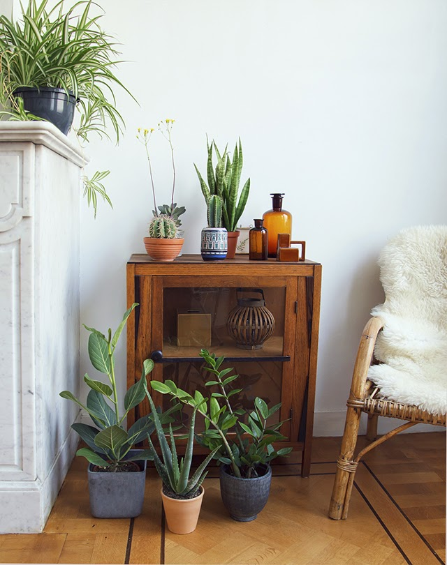 My plant gang | Urban Jungle Bloggers