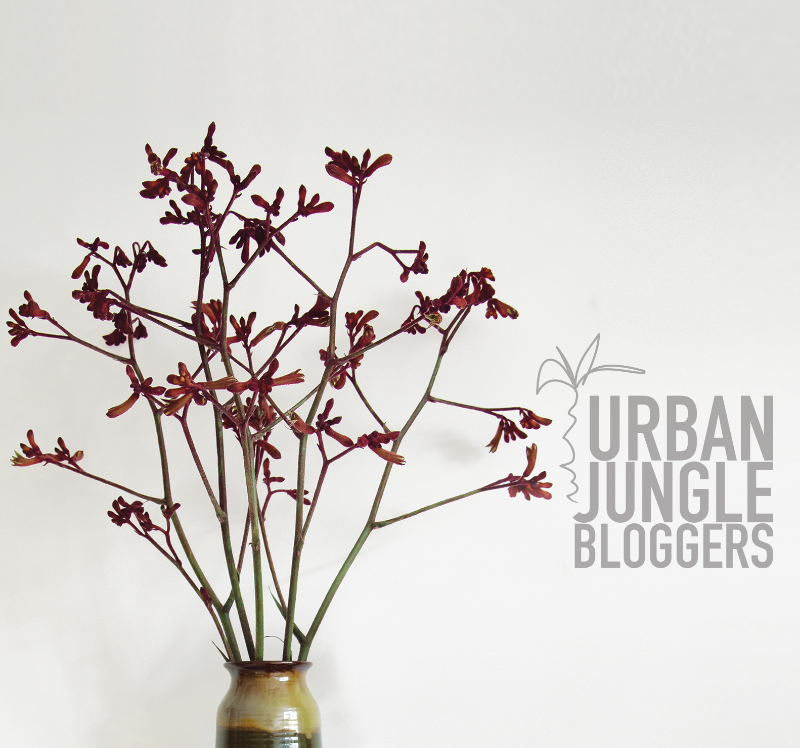 Plants & Flowers | Urban Jungle Bloggers