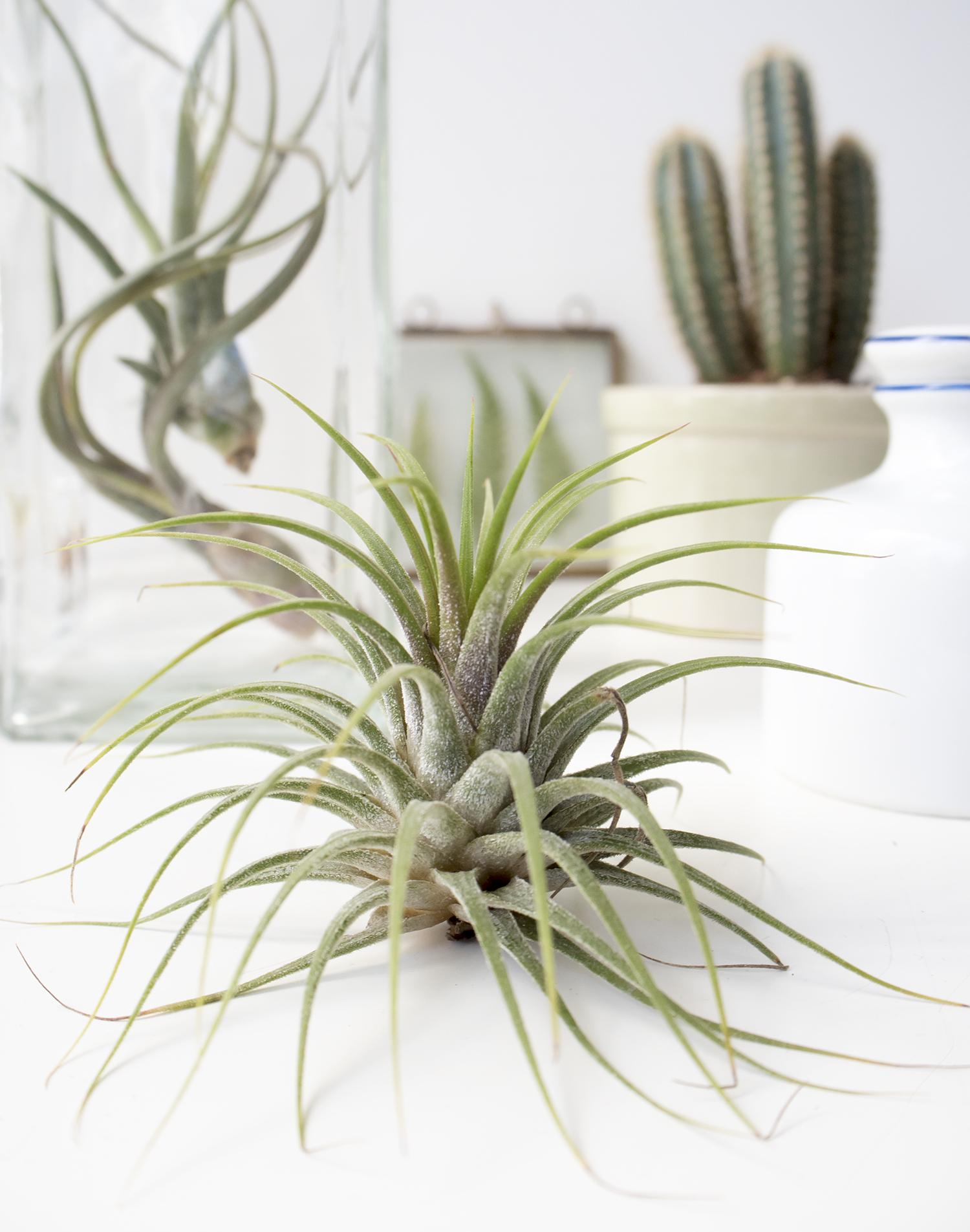 Plants and Glass | Urban Jungle Bloggers