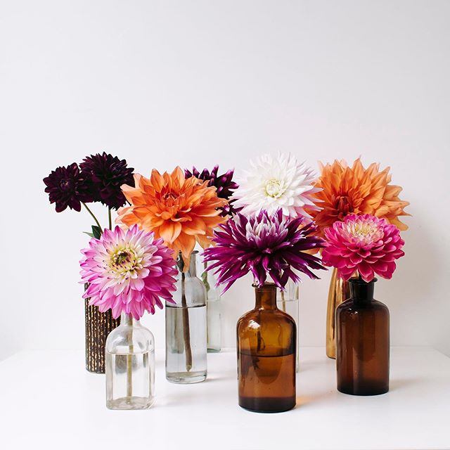 So overwhelmed by all your heartwarming comments on my previous post. You are incredible, so much love, thank you so much! ❤️ ⠀ These Dahlias are from my friends garden that she picked for me, thank you @corandger .⠀ .⠀ .⠀ .⠀ .⠀ .⠀ #underthefloralspell #createinsummer #inspiredbynature_ #ccseasonal #simplethingsmadebeautiful #inspiredbyflowers #thefloralseasons #foundandforaged #botanicaldreamers #stylingtheseasons #wildforflowers #distractionsandinspirations #myfloraldays #petalsandprops #myseasonalstory #ihavethisthingwithflowers #calmversation #foundandforaged #holdthemoments #seaofflowers #floralstories #astilllifestyle #flowermagic  #allthingsbotanical #alliseeispretty #justbefloral #beautyinsimplicity #searchwondercollect #darlingmoment #tv_stilllife