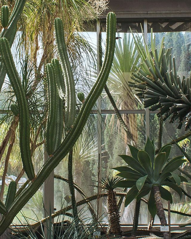 Back from a visit to our friends in Berlin! It was so good to have a change of scenery and take my mind of things. I really wanted to check out the Botanical Garden this time, although it was very hot weather 😅  Just love greenhouses 💚🌿 Have a lovely evening!⠀ .⠀ .⠀ .⠀ .⠀ .⠀ .⠀ #plantsofinstagram #gardensofinstagram #instagarden #greenery #plantsplantsplants #plantsmakepeoplehappy #plantsarefriends #horticulture #welcometothejungle #botanical #foliage #leaflove #greenedit #chasinglight #thesimplethings #botanicalgarden #jungalowstyle #jungalow #urbanjunglebloggers #ihavethisthingwithplants #weloveplants #cactusmagazine #abmplantlady #planttherapy #prickleandvine #alliseeispretty #theartofslowliving #vscoplants #inspiremyinstagram #plantphotography