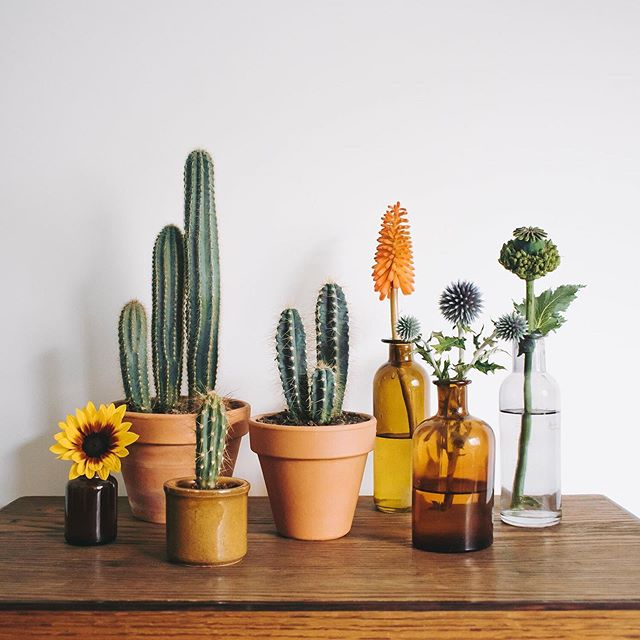 Cactus & flowers 🌵🌻Wishing you all a wonderful weekend!⠀ .⠀ .⠀ .⠀ .⠀ .⠀ .⠀ #underthefloralspell #createinsummer #inspiredbynature_ #ccseasonal #simplethingsmadebeautiful #inspiredbyflowers #thefloralseasons #foundandforaged #botanicaldreamers #stylingtheseasons #urbanjunglebloggers #jungalowstyle #myfloraldays #petalsandprops #myseasonalstory #ihavethisthingwithflowers #calmversation #foundandforaged #holdthemoments #ihavethisthingwithplants #floralstories #astilllifestyle #flowermagic #allthingsbotanical #alliseeispretty #cactusmagazine #beautyinsimplicity #searchwondercollect #darlingmoment #tv_stilllife