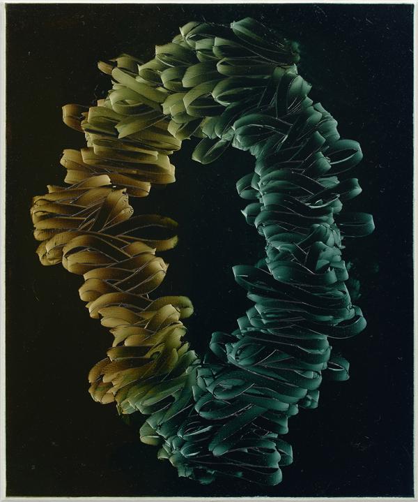 Seth Pick  Untitled (2016) Oil on canvas 60 x 50 cm