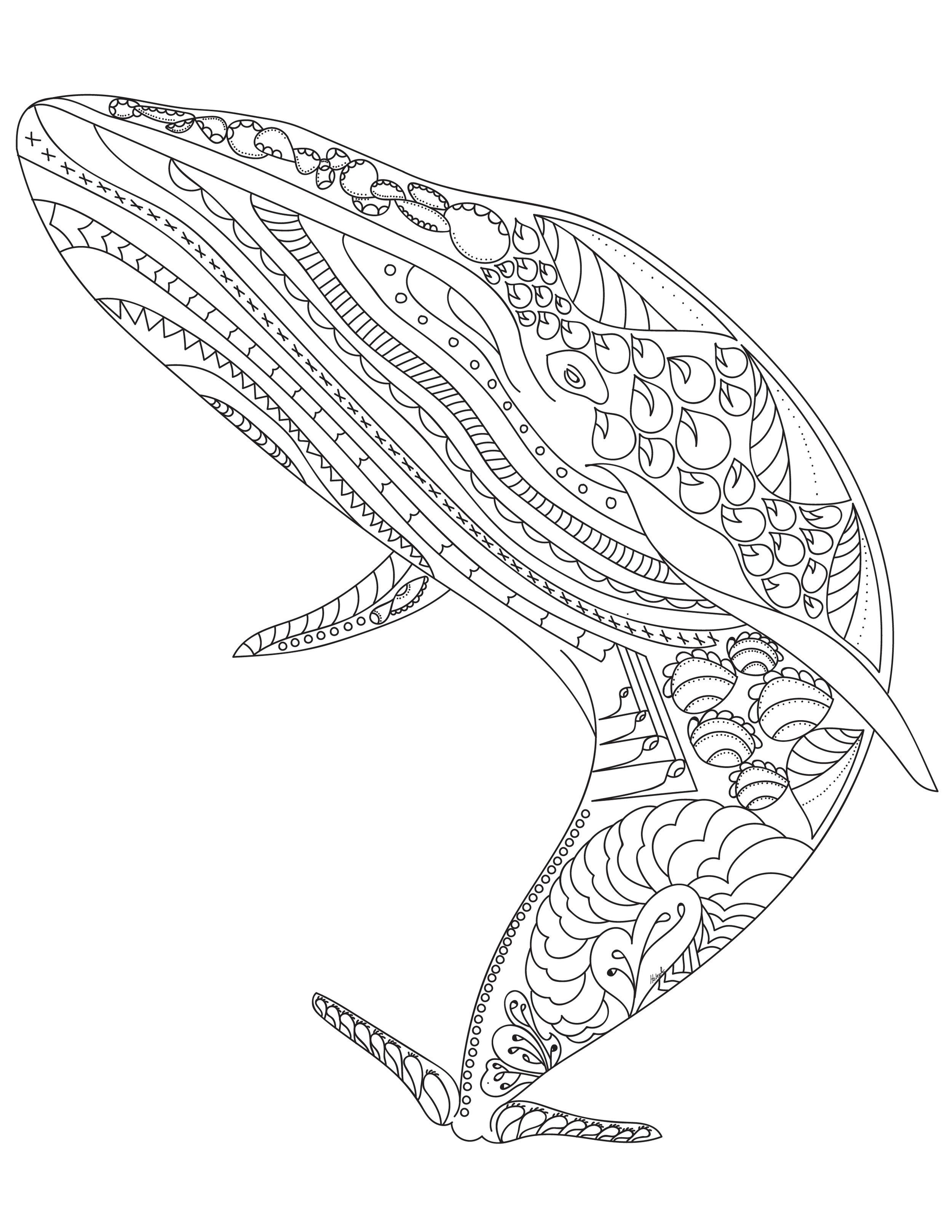 blue whale colouring sheet-01.jpg