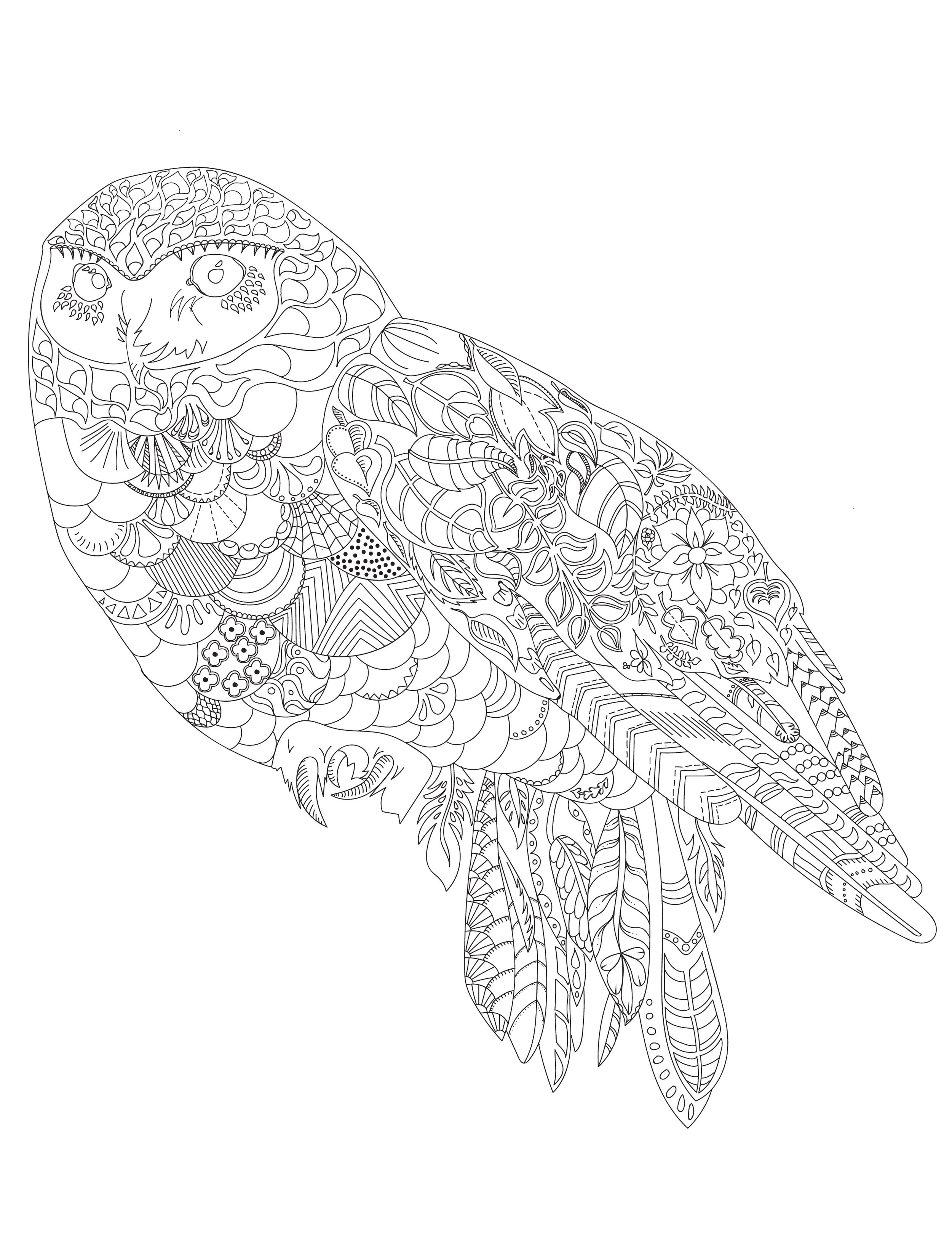 Colouring Sheet-Owl-04.jpg