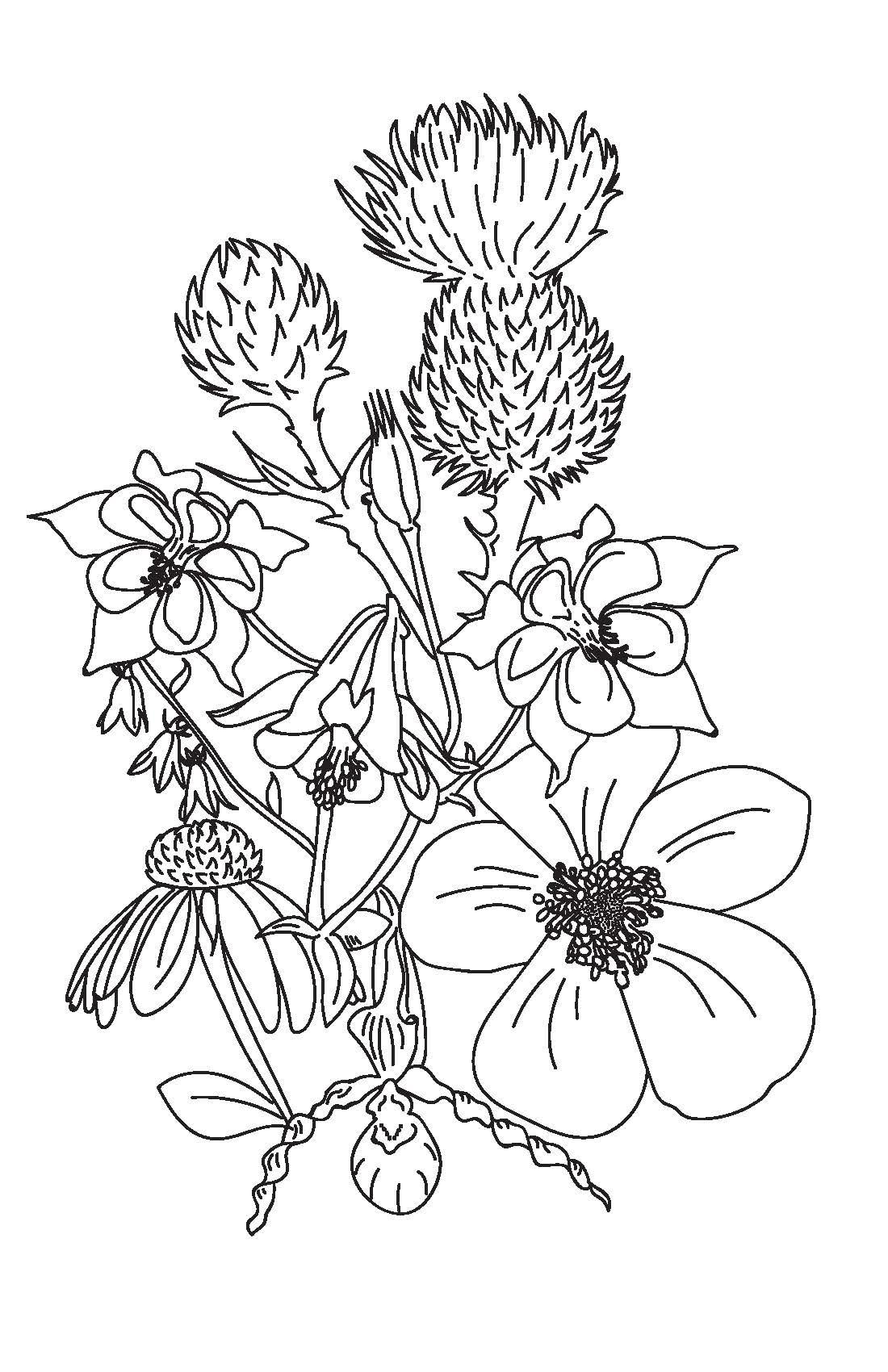 ontario wildflowers_Page_2.jpg
