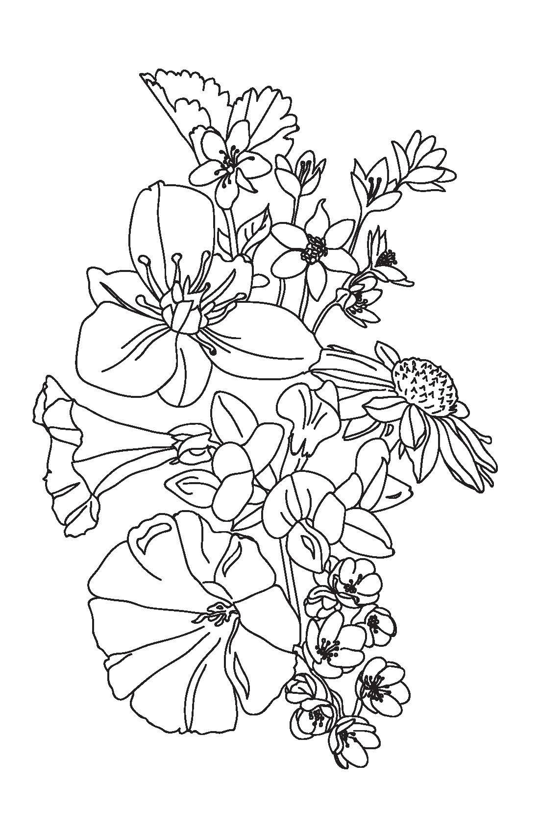ontario wildflowers_Page_1.jpg