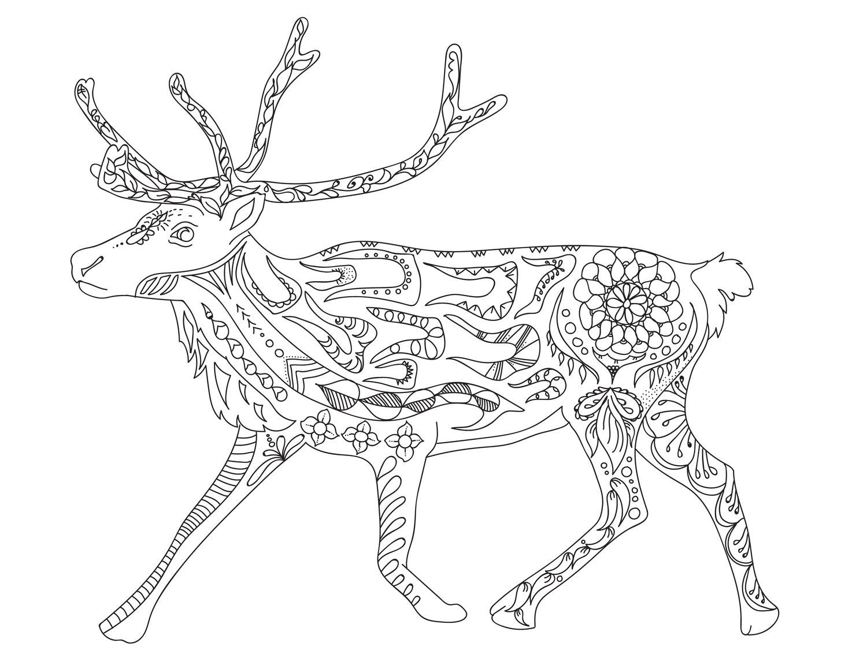 caribou-01.jpg