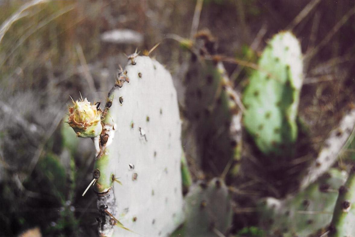 Cactus by Sam Spahr