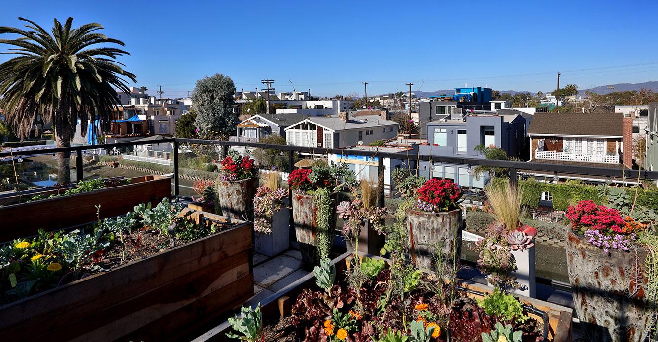 Rooftop-garden-modern-los-angeles-SiliconBay.JPG