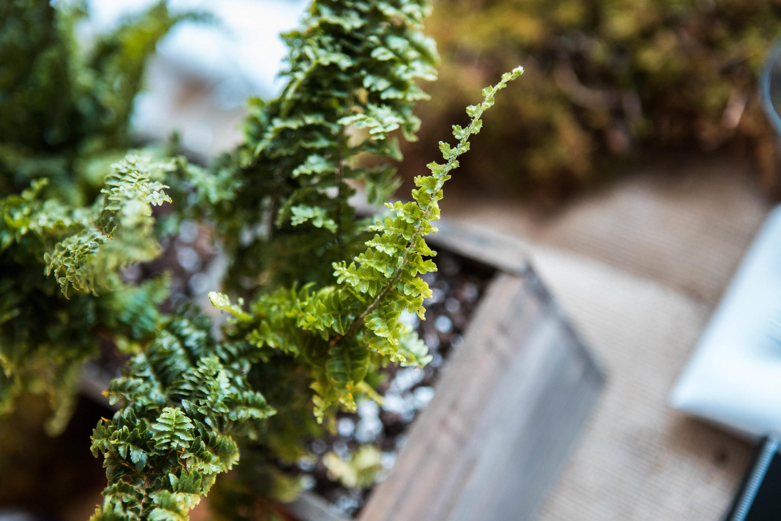 Locally sourced ferns