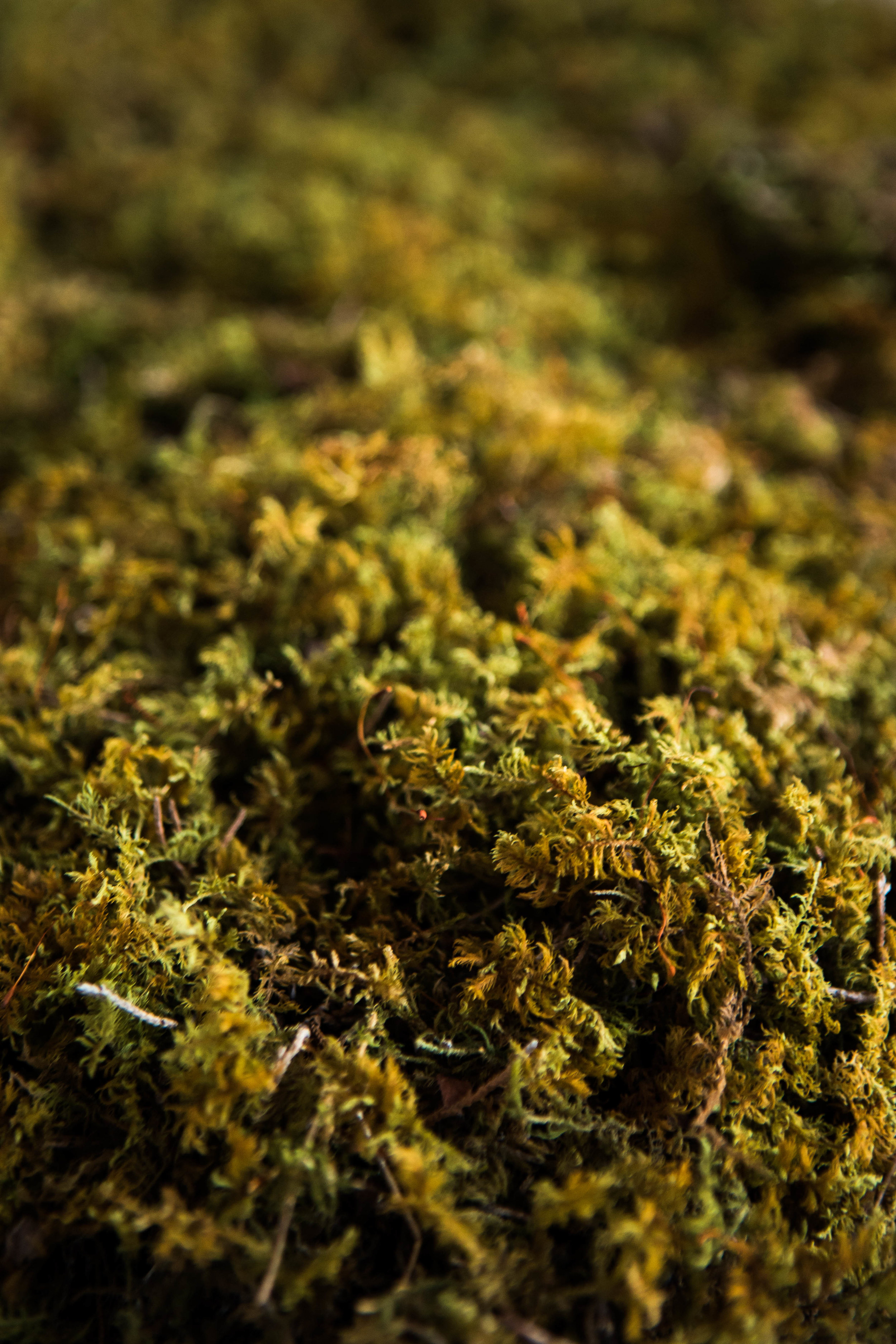 Locally sourced moss