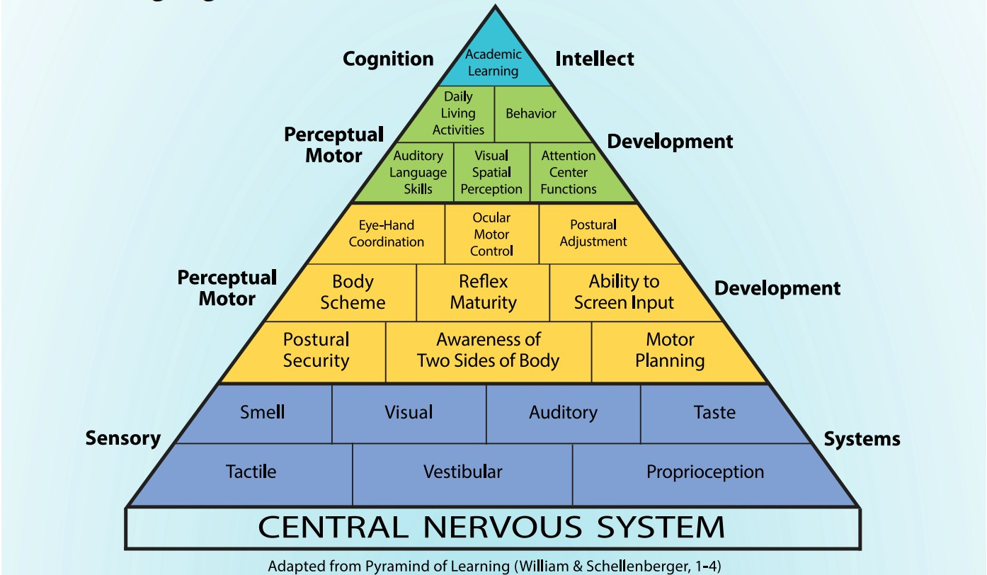 central nervous system.jpg