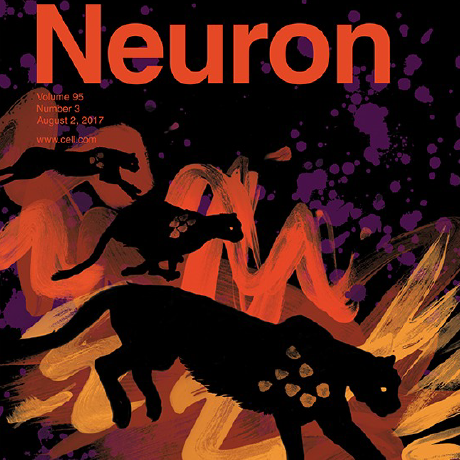 Behaviorally-selective engagement of short-latency effector pathways by motor cortex. - Miri, A., Warriner, C.L., Seely, J.S., Elsayed, G.F., Cunningham, J.P., Churchland, M.M., Jessell, T.M. (2017). Neuron 95(3):683-696.Download PDF