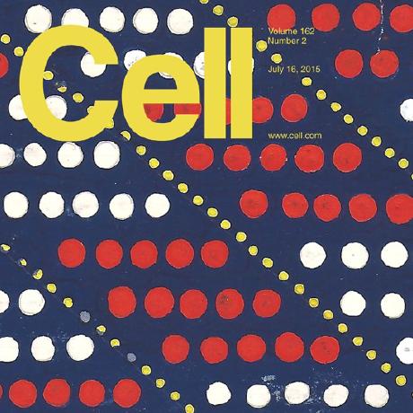 Primacy of flexor locomotor pattern revealed by ancestral reversion of motor neuron identity. - Machado, T.A., Pnevmatikakis, E., Paninski, L., Jessell, T.M., Miri, A. (2015). Cell 162(2):338-50.Download PDF