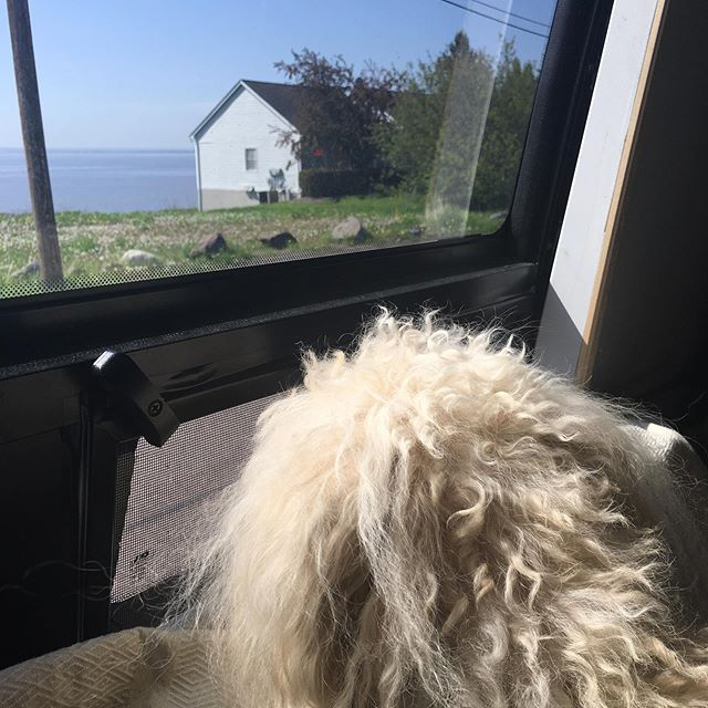 When you think your dog is coming to snuggle up but in reality he wants to shove his snout against the open window and look at the view.