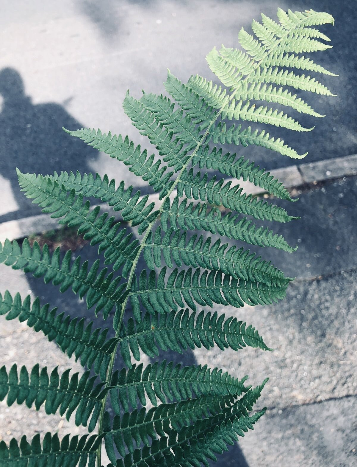 The Fern - No matter what, you must find the strength to carry on….Through adversity and life's ups and down look forward to telling your testimony to others. Let them know that GOD protected you in a place where you had no one. A place where like a pant, you were still able to grow. GOD is the water for your soil.Fe
