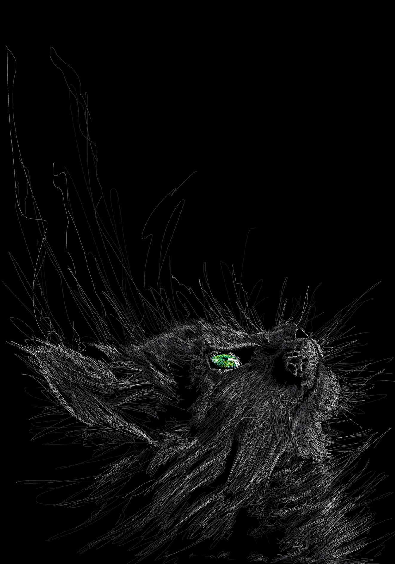 Cat original_Compressed.png