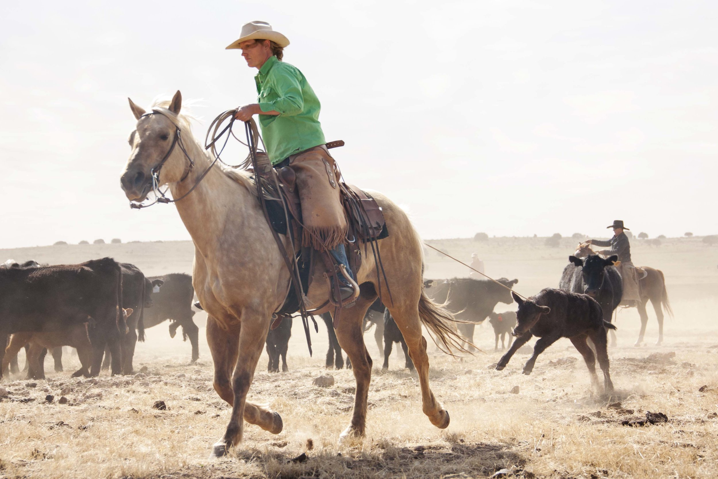Amy Wright, ranch manager, bringing a calf to the branding fire
