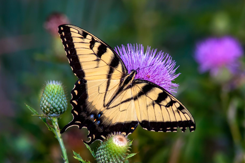 Butterflies & Moths -